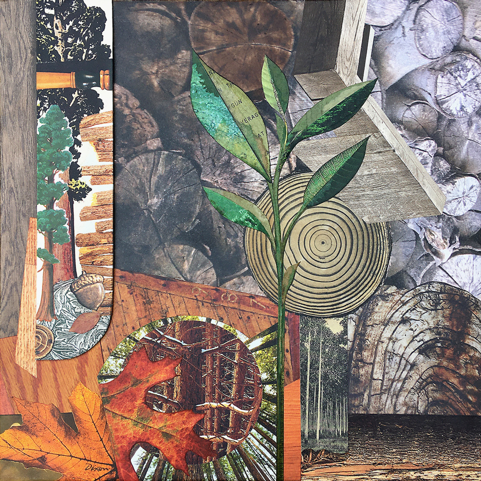 Renewal ~ collage on canvas J A Dixon